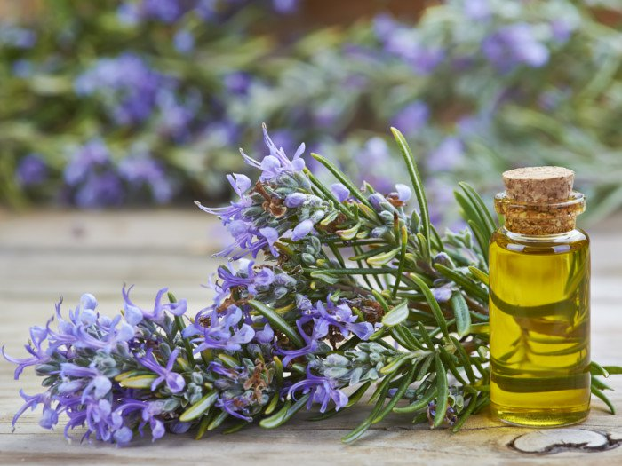 Can I Apply Lavender Oil Directly to My Scalp?